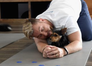 Lance Bass takes his dogs to yoga